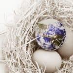 Globe Eggs