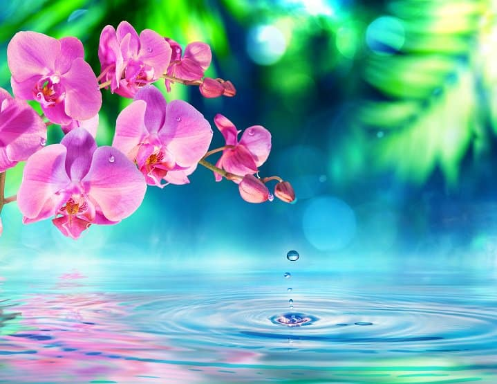 pink orchid over rippling pond water