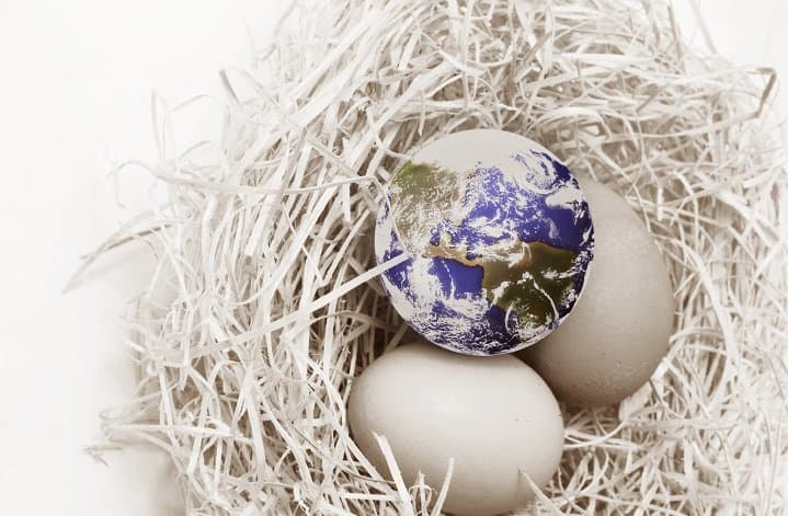 eggs plus globe in nest