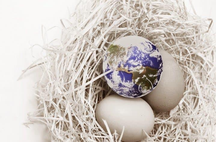 eggs plus globe in nest