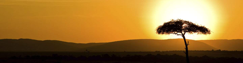 africa sunrise with single tree