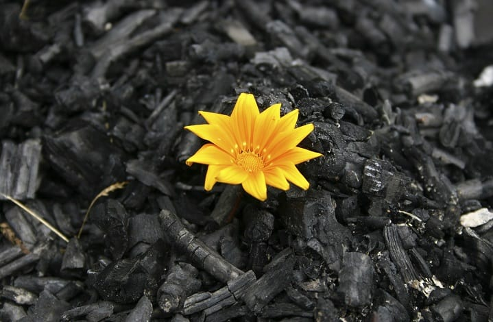 yellow flower in dirt