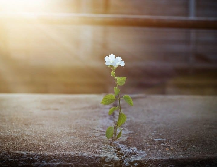 white flower growing in concrete ledge in sunlight